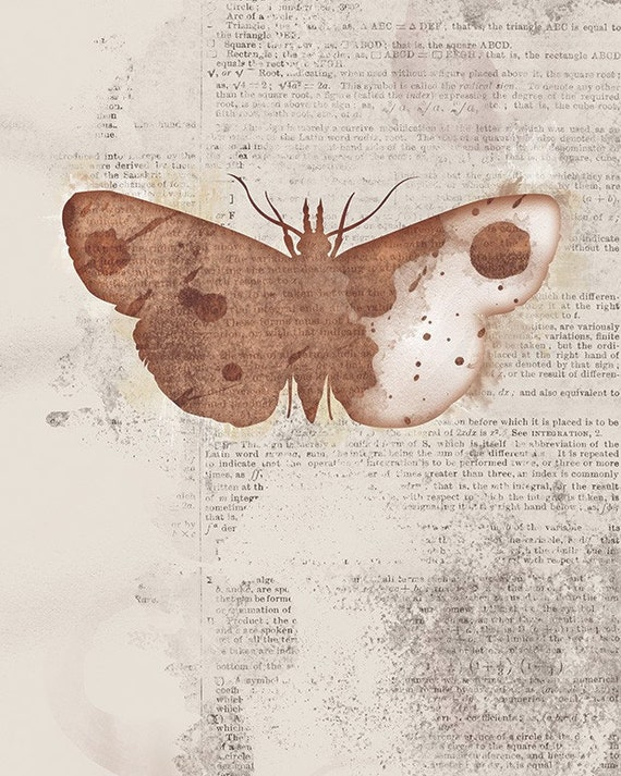 Moth Art - 24x36 Print Large - Leopold - Butterflies and Moths Series - Brown Collage Art