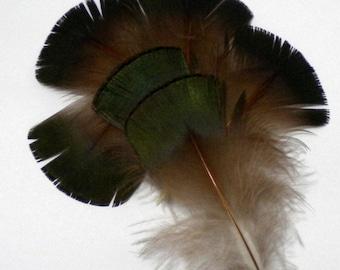 20 Iridescent Green Golden Pheasant Craft Feathers