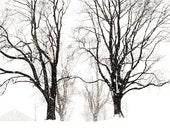 Black and White Decor Rural Photography, Bucks County Pennsylvania, Solebury School In Winter, Tree Decor