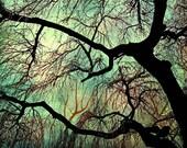 Tree Photography, Winter Tree Photo, Fine Art Nature Photography  - emerald green sky dark night woodland adventure 8x10 - Into The Night