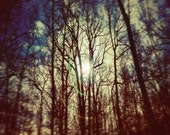 Full Moon Photography, Night Sky Print, woodland photography, harvest print, fall sky, Monaco blue, midnight forest, fine art photography
