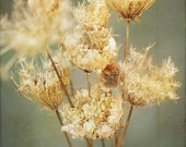 Nature photography, art, for bathroom, flower photograph, dried flowers, green bath decor,wall art,queen annes lace, cream brown decor
