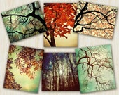 Tree Photography autumn leaves - Forest For The Trees - autumn trees splendor woodland naturalist hiking decor - set of 7 5x7 - 5x5 photos