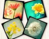home decor flower photography nature prints garden prints pink green teal yellow Fine Art Photography Mini Flower Print Set 5 at 5x5