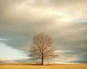 Landscape Photography, Lone Tree In Field, Sky Photograph, Pastel, Golden Sunlight, Rustic Wall Art, Blue Sky, Nature Photo
