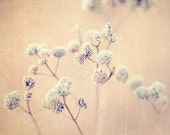 Photography Botanical Art Photograph neutral cream seed pods photo garden dried flowers country decor spring photography photograph
