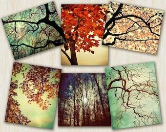 Nature photography, tree photography, home decor, hiking outdoors art naturalist woodland tree prints unisex gift 6 large prints, tree art