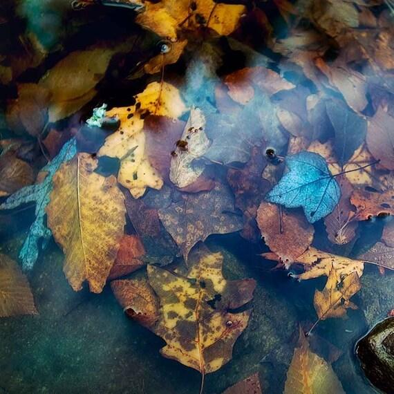 Autumn Photography Blue Bathroom Art, Fall Leaves Monaco blue art print, Blue Bathroom Print gold and blue art Harvest Color photography art