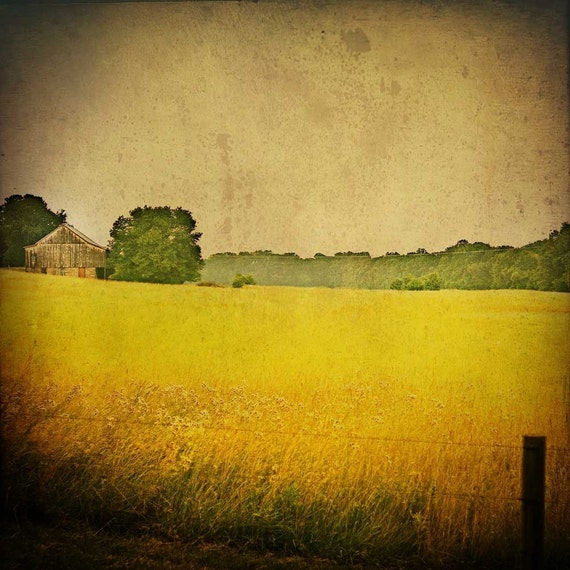 Landscape Photography, Wall Art, Bucks County Photography, Nature Print, Home Decor, Wheat Fields, Art Photography, Print, Wall Picture