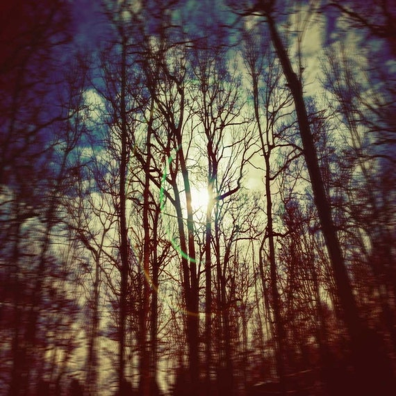 Full Moon Photography, Night Sky Print, woodland photography, harvest print, fall sky, Monaco blue, midnight forest, fine art photography