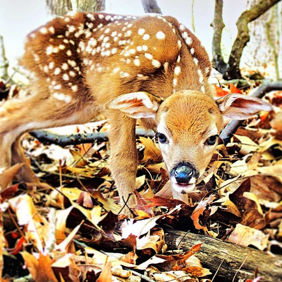 Animal Photography, Lodge decor, Deer Art, Rustic Art, Nursery Art, Woodland Creatures, doe, fawn, animal print, deer art, fawn decor