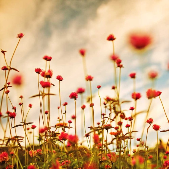 Red flower photography, nature photo, home decor, baby blue sky, pink and red flowers, summer meadow, red floral print