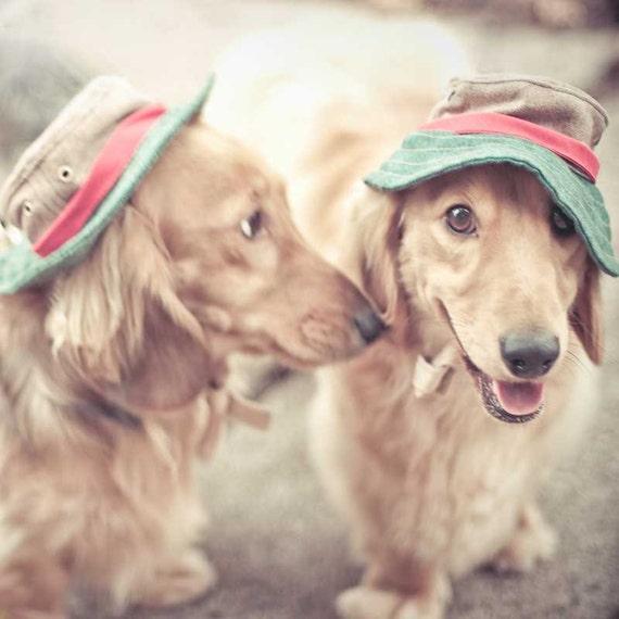 Animal Photography, Dog photo, Dachshund Print, Home Decor, Funny Print, Dachshund decor, nursery art, pet art, dog photography