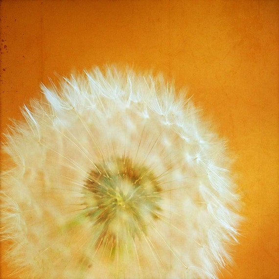 Dandelion photography, flower photograph, Dandelion Print, shabby chic decor, Orange Decor, Amber Decor, nursery art for bathroom