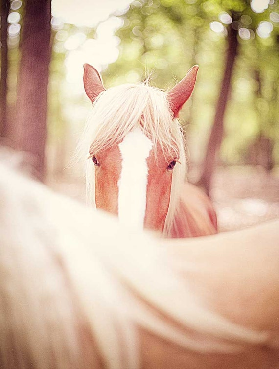 Horse photo equine art brown horse home decor woodland western wildlife cowboy riding stallion - 8x10