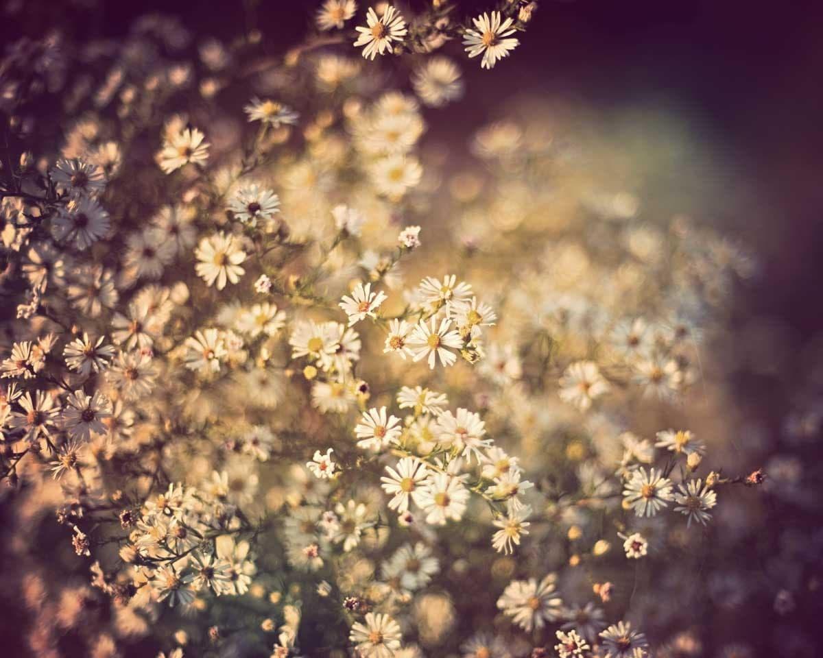Vintage Flower Photography Backgrounds Spring flower photogra...