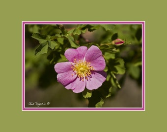Beautiful Montana Flower, Original Fine Art Photography