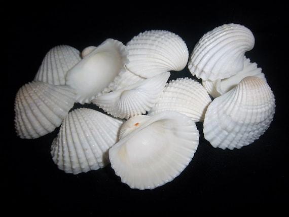 beach Decor-12-white m...