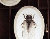 cicada art original pyrography woodburning embroidery hoop art