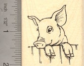 Cute pig looking over fence   Rubber Stamp H13513 - Wood Mounted