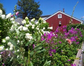 Garden, Black Dog Tavern - Martha's Vineyard, MA