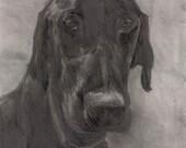 Shelter Dog Series: Droop...