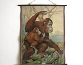 RESERVED Vintage Antique School Wall Chart Natural History Zoology Orangutan Monkey Primate 1900s Austin Modern
