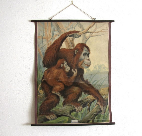 RESERVED Vintage Antique School Wall Chart Natural History Zoology Orangutan Monkey Primate 1900s Austin Modern