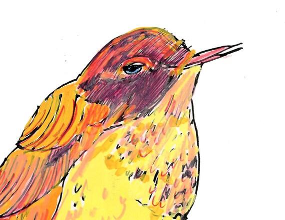 Yellow and orange bird