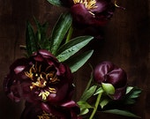 dark botanical_no_10