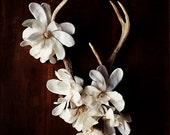 antler botanical_no_3