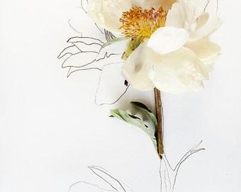 botanical drawing no. 6012