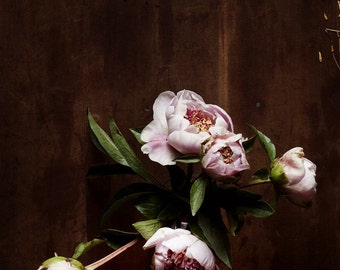 dark botanical_no_13