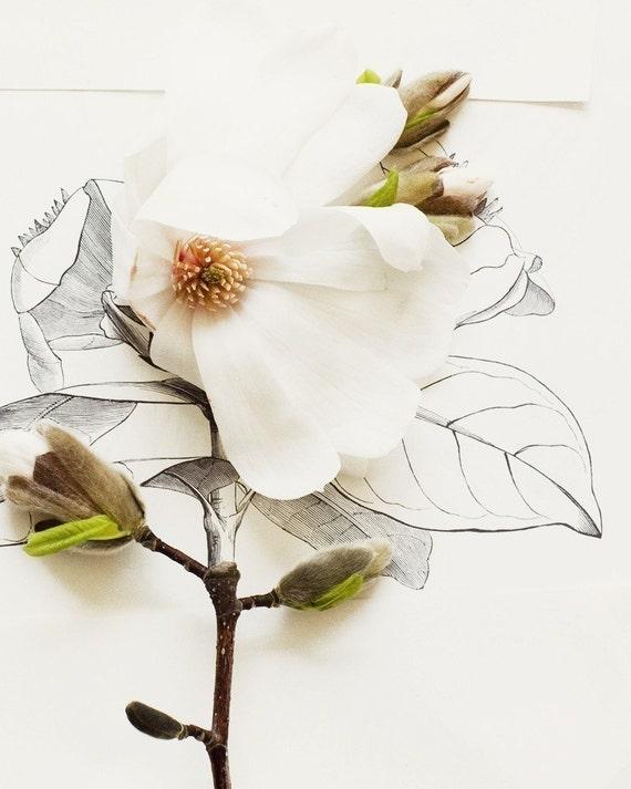 Magnolia and flower illustration no. 6688