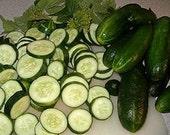 1 Step 8 oz  Cucumber Salad - Natural Hair Cleanser / Conditioner - No Sulphates, No Parabens, No Stripping Detergents