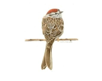 Chipping Sparrow - Print