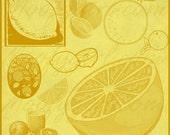 Citrus Lemon Orange Photoshop Brushes Brush Set