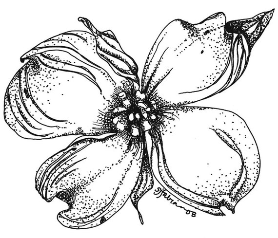 Dogwood Flower Line Drawing : Items similar to dogwood elegance flower line art