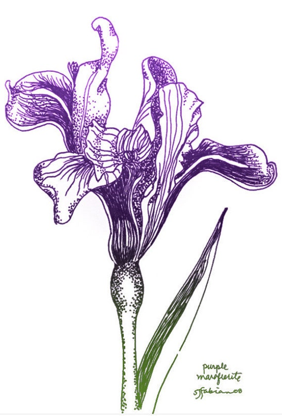 Line Drawing Etsy : Items similar to grandma marguerite s iris unfurling
