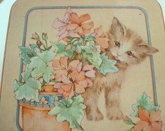 Kitty Tin