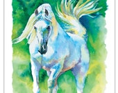 White Arabian Horse Stallion  - giclee watercolor print