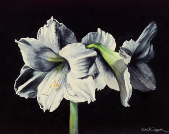 White Amaryllis Watercolor Digital Art Print ON SALE