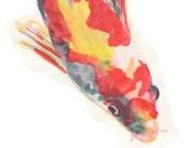 SALE Koi Sumi-e watercolor ink print
