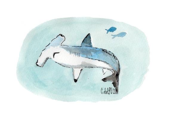 Hammerhead Shark - Tiny Zoo Ocean Art Print