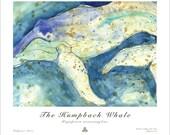 The Humpback Whale - Megaptera novaeangliae