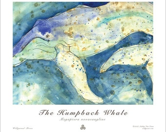 The Humpback Whale - Megaptera novaeangliae