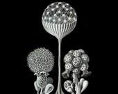 Underwater Microscopic 6 - 8x10 Archival Print