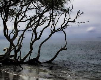 Greeting our Mother - Fine Art Photo - Kiawe Trees and Ocean-Tropical Beach- Beach Photo - Hawaii Photo - Home Decor
