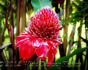 Road to Hana - Torch Ginger - Tropical Photo - Maui - Hawaii - Tropical Flower - Hawaii Photo - Home Decor - Office Decor