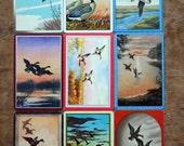 Vintage Trading Cards - Big Game Birds